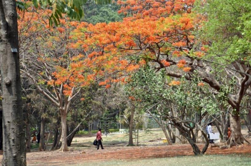 Fotografia: Mi mirada del Sur de la India 1