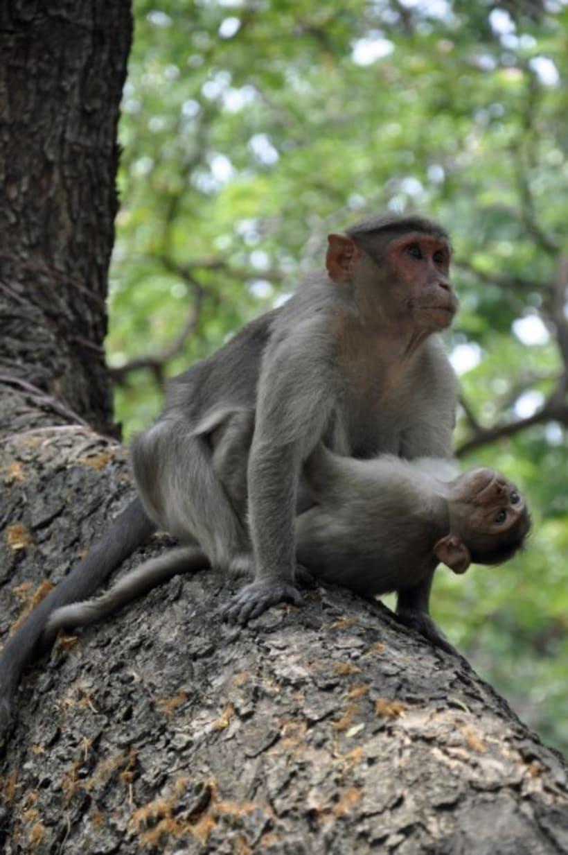 Fotografia: Mi mirada del Sur de la India 2