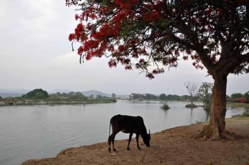 Fotografia: Mi mirada del Sur de la India 11