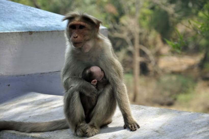 Fotografia: Mi mirada del Sur de la India 12