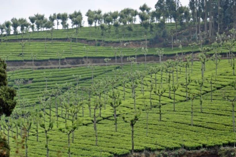Fotografia: Mi mirada del Sur de la India 15