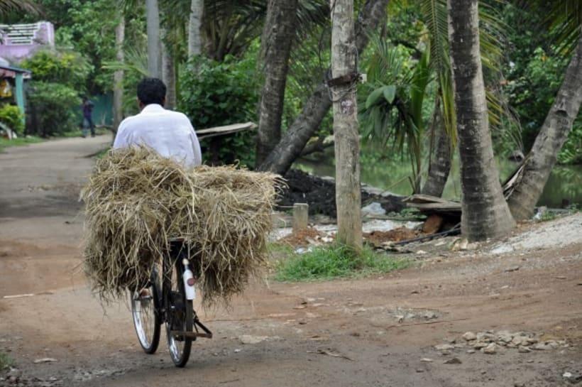 Fotografia: Mi mirada del Sur de la India 25