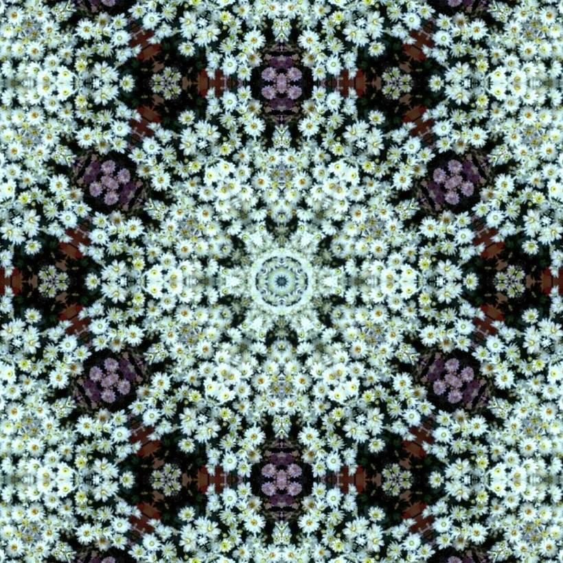 Kaleidoflowers 0