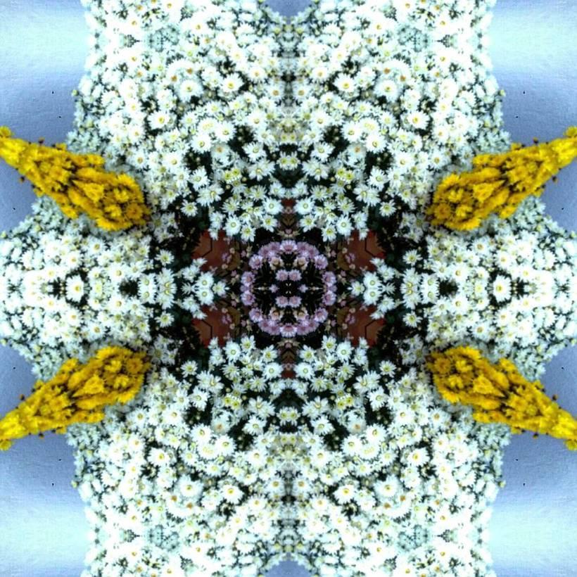 Kaleidoflowers 1