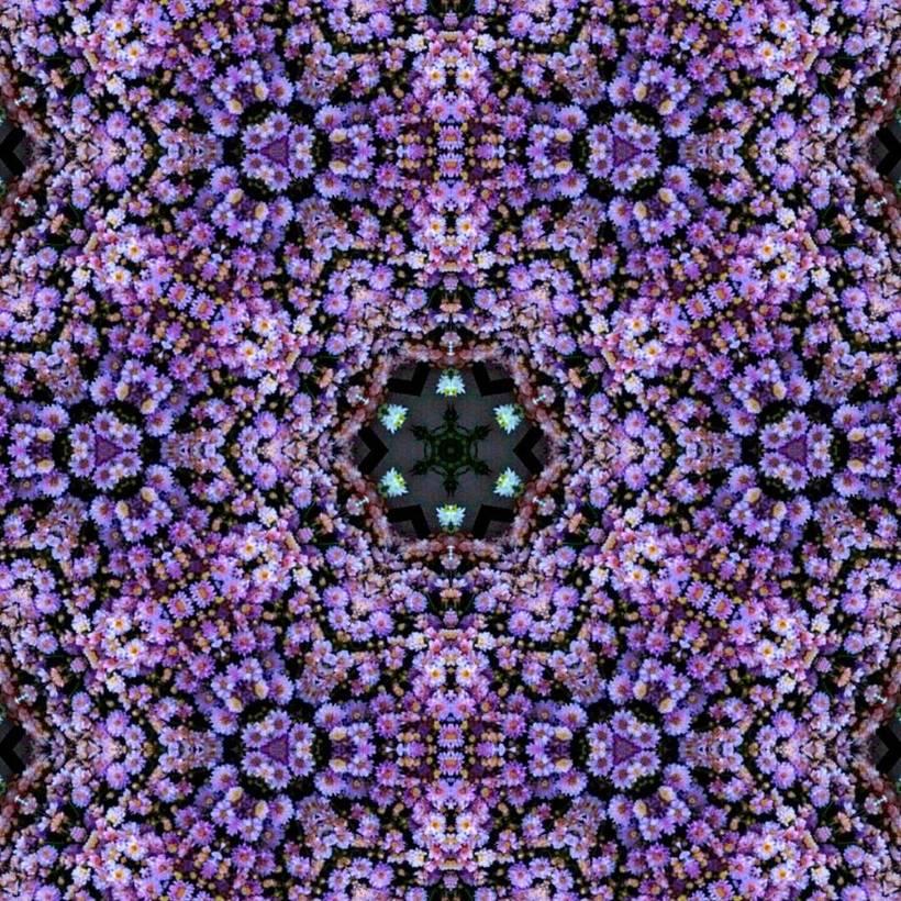 Kaleidoflowers 7