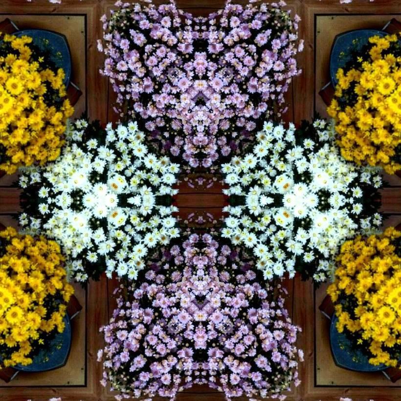 Kaleidoflowers 9