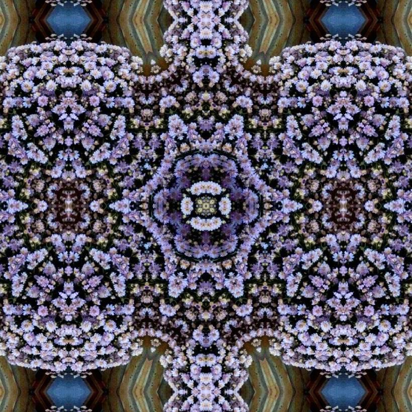 Kaleidoflowers 10