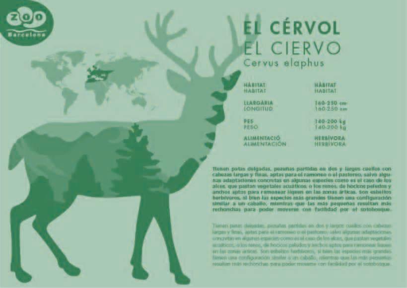 Ejemplo Plafó EL CÉRVOL -1