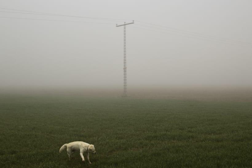 """""""El perro en la niebla"""" 2"""