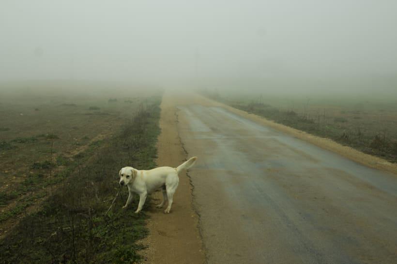 """""""El perro en la niebla"""" 5"""