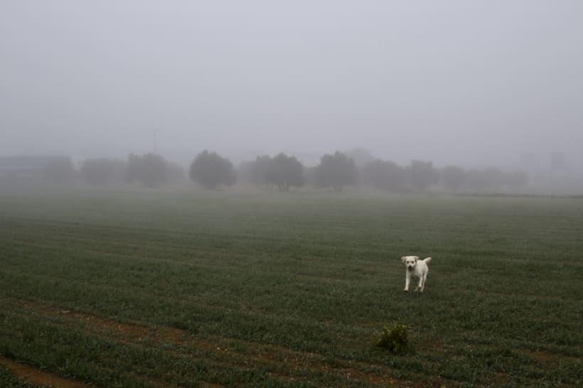 """""""El perro en la niebla"""" 6"""