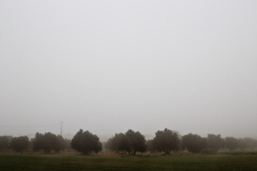 """""""El perro en la niebla"""" 7"""