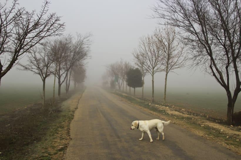 """""""El perro en la niebla"""" 8"""