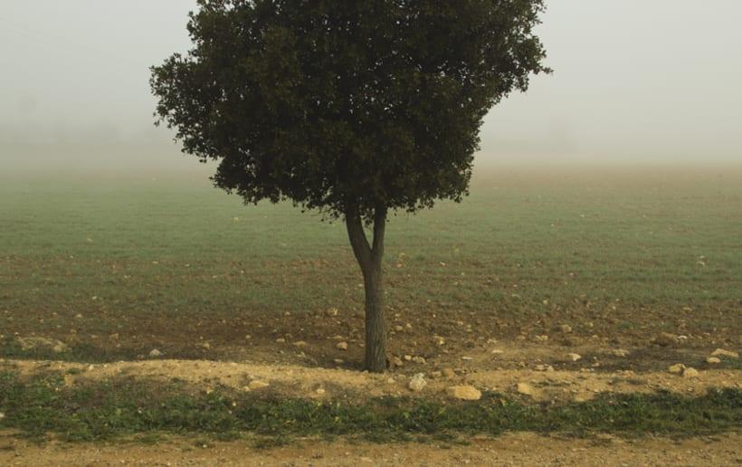 """""""El perro en la niebla"""" 9"""