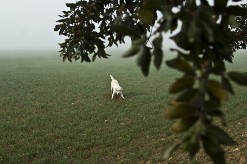 """""""El perro en la niebla"""" 10"""