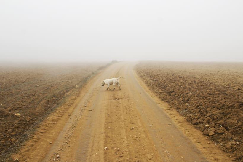 """""""El perro en la niebla"""" 13"""