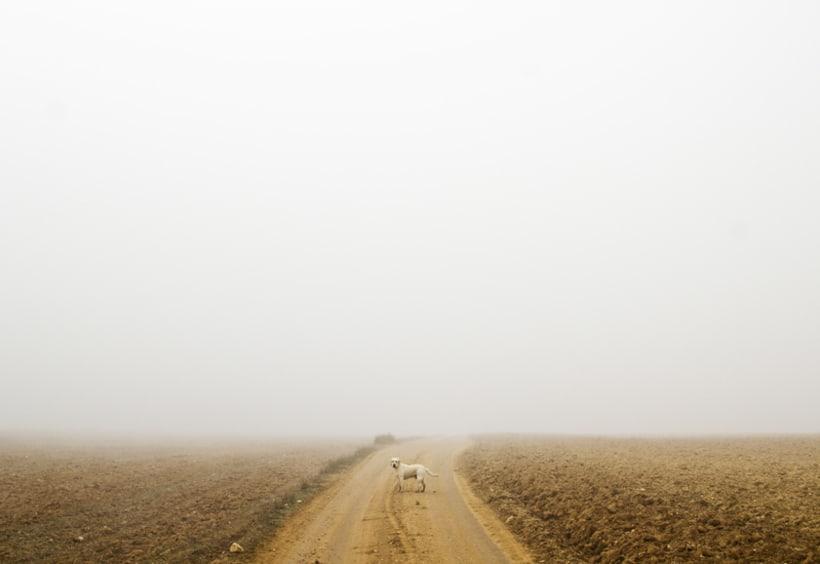 """""""El perro en la niebla"""" 14"""