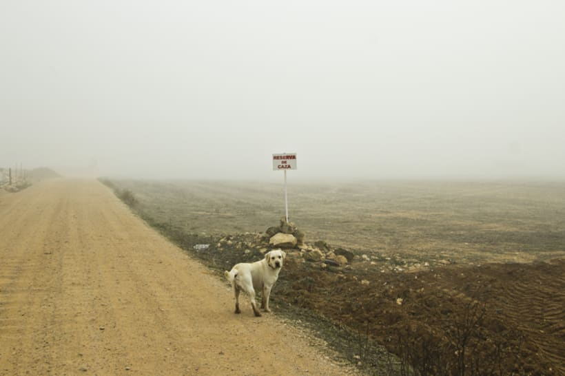 """""""El perro en la niebla"""" 15"""