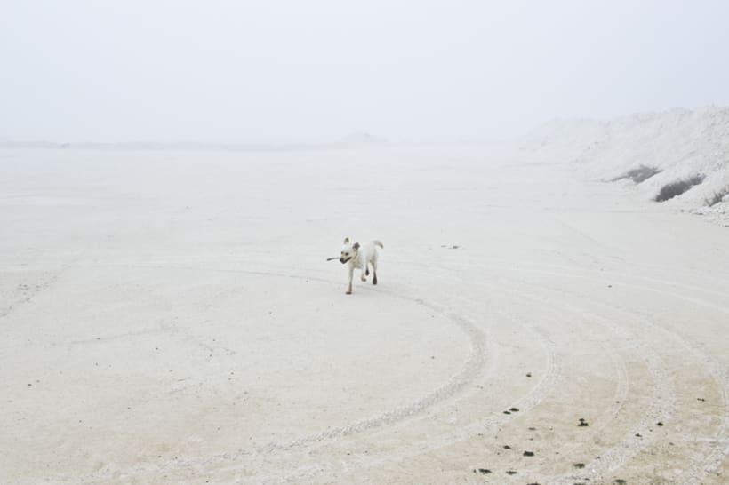 """""""El perro en la niebla"""" 16"""