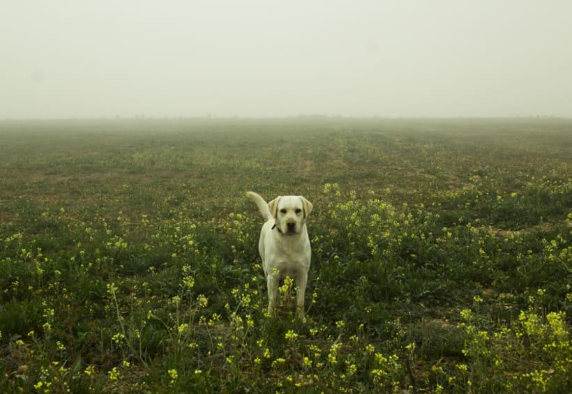 """""""El perro en la niebla"""" 17"""