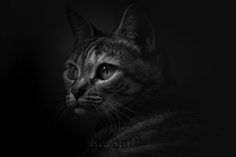 FOTOGRAFIA  0