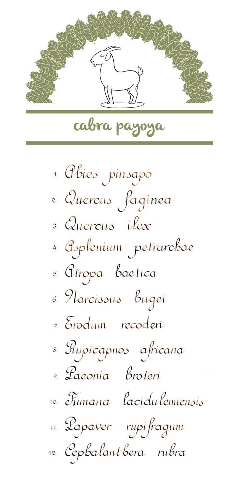 Proyecto Cabra Payoya. 01. 1