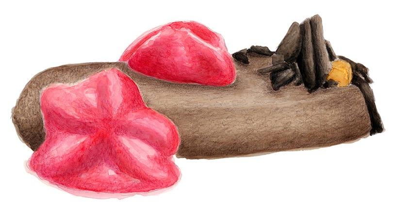 Ilustraciones para pastelería 3