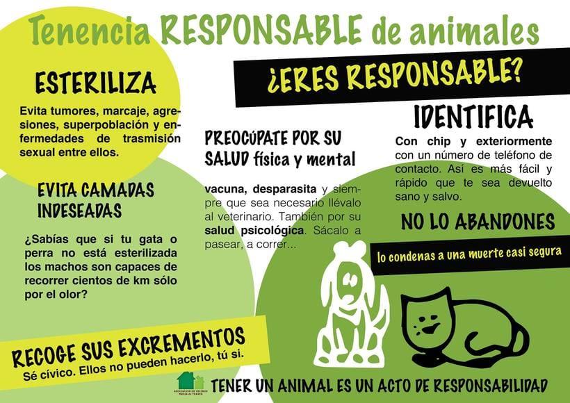 Proyecto concienciación Gatos de Masía 1
