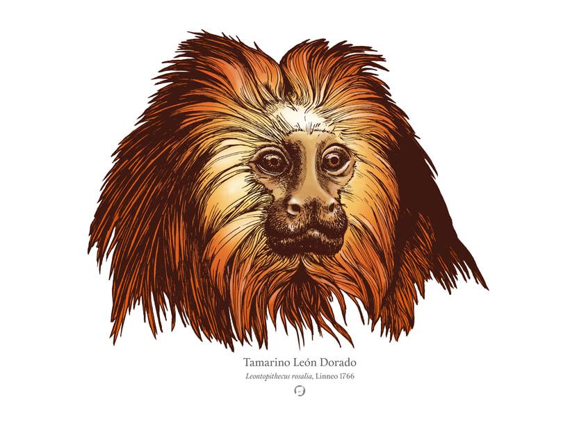 Animalia 2