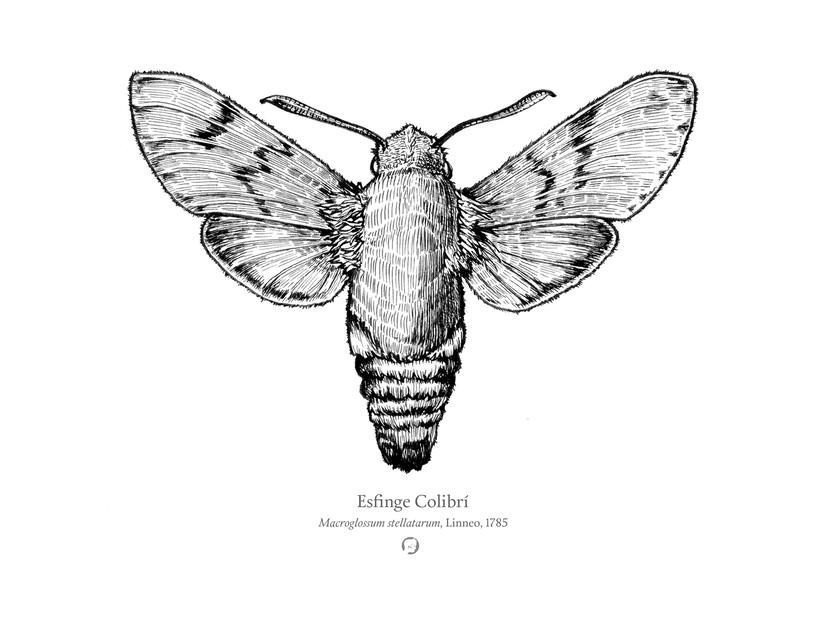 Animalia 5