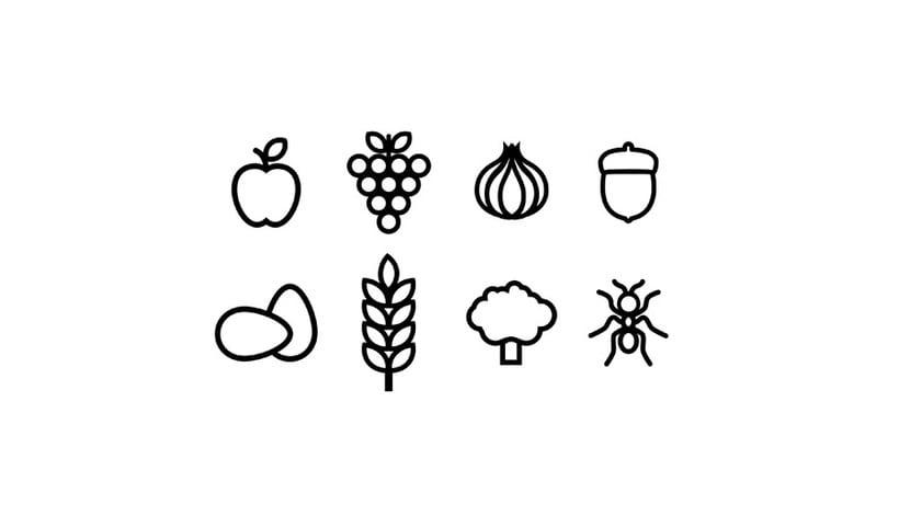 Food History 5