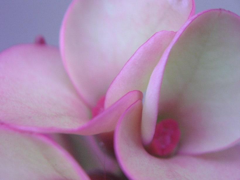 Floral impressions 14