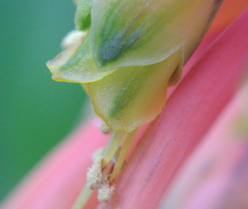 Floral impressions 5
