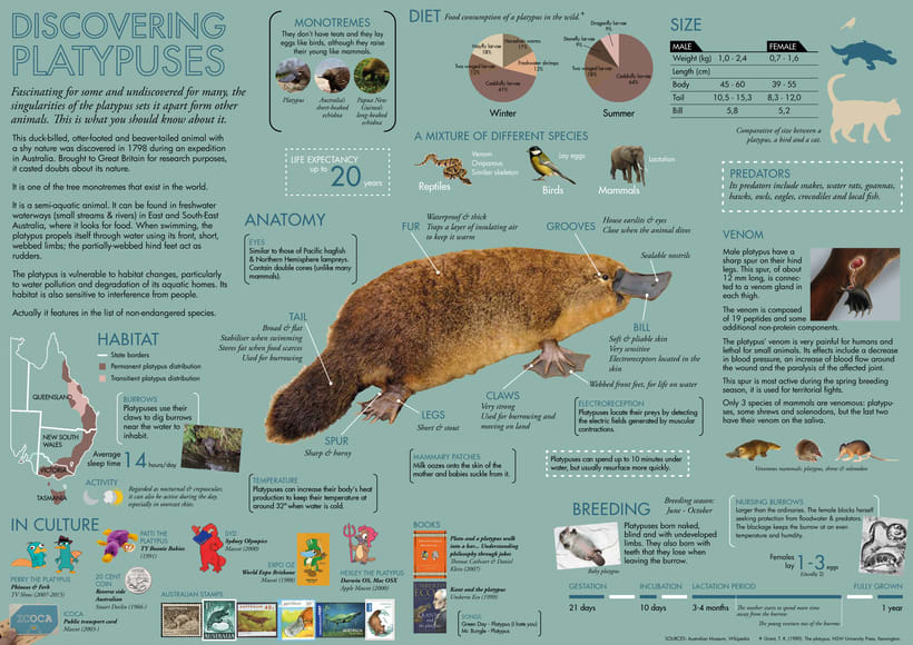 Discovering platypuses -1