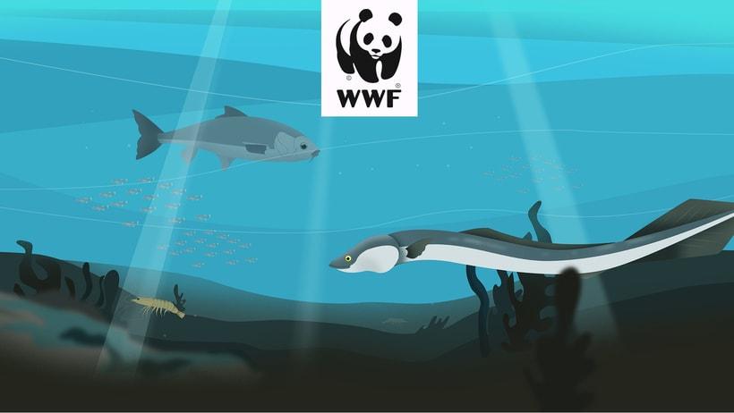 ·WWF DRAGADOS· 0