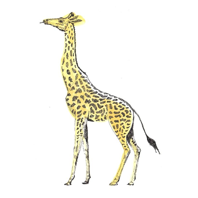 Animals 10