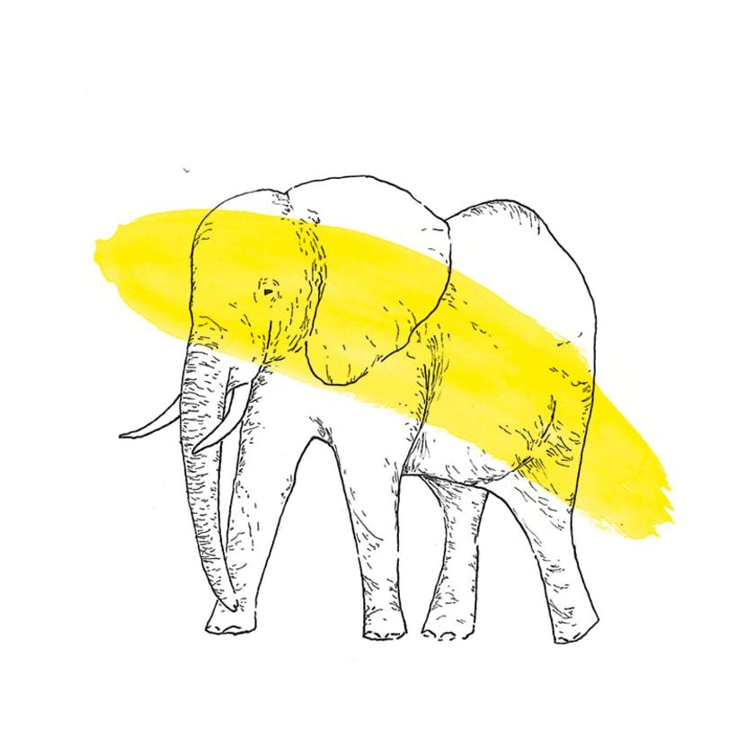 Animals 13