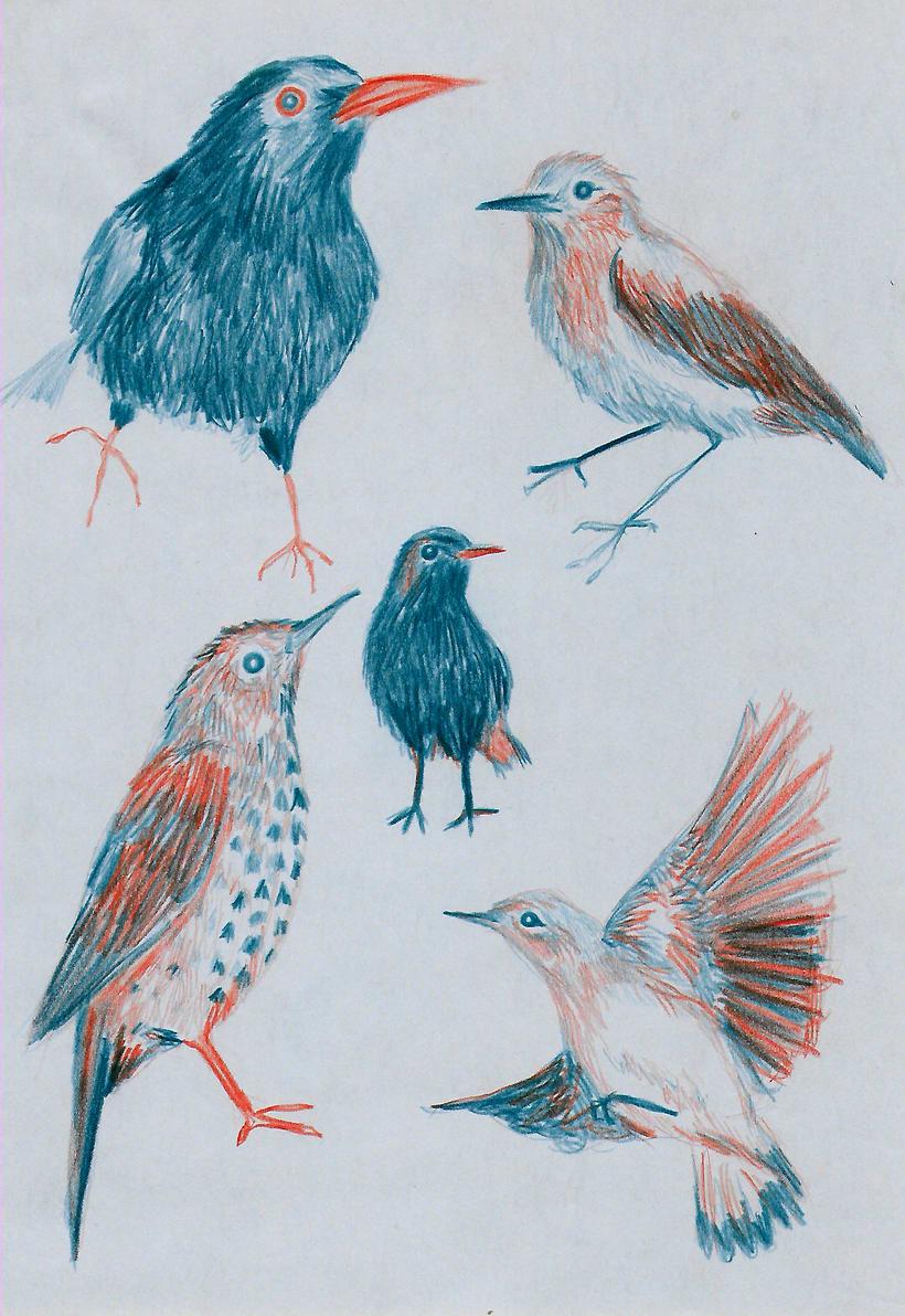 Animals 18