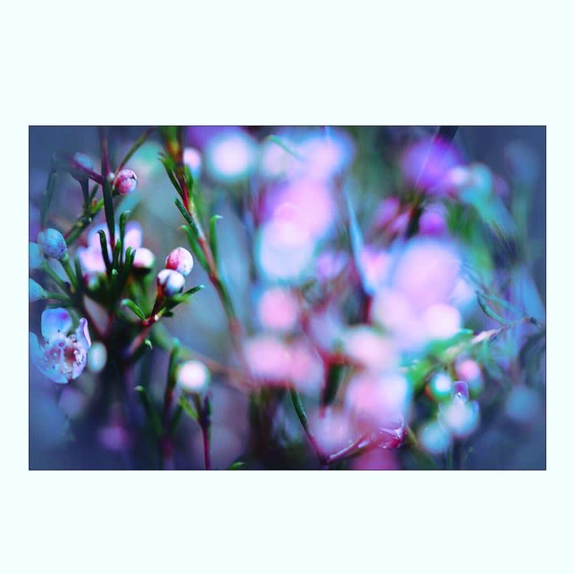 Flowers  10