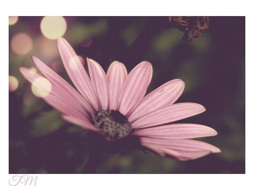 Flowers  15