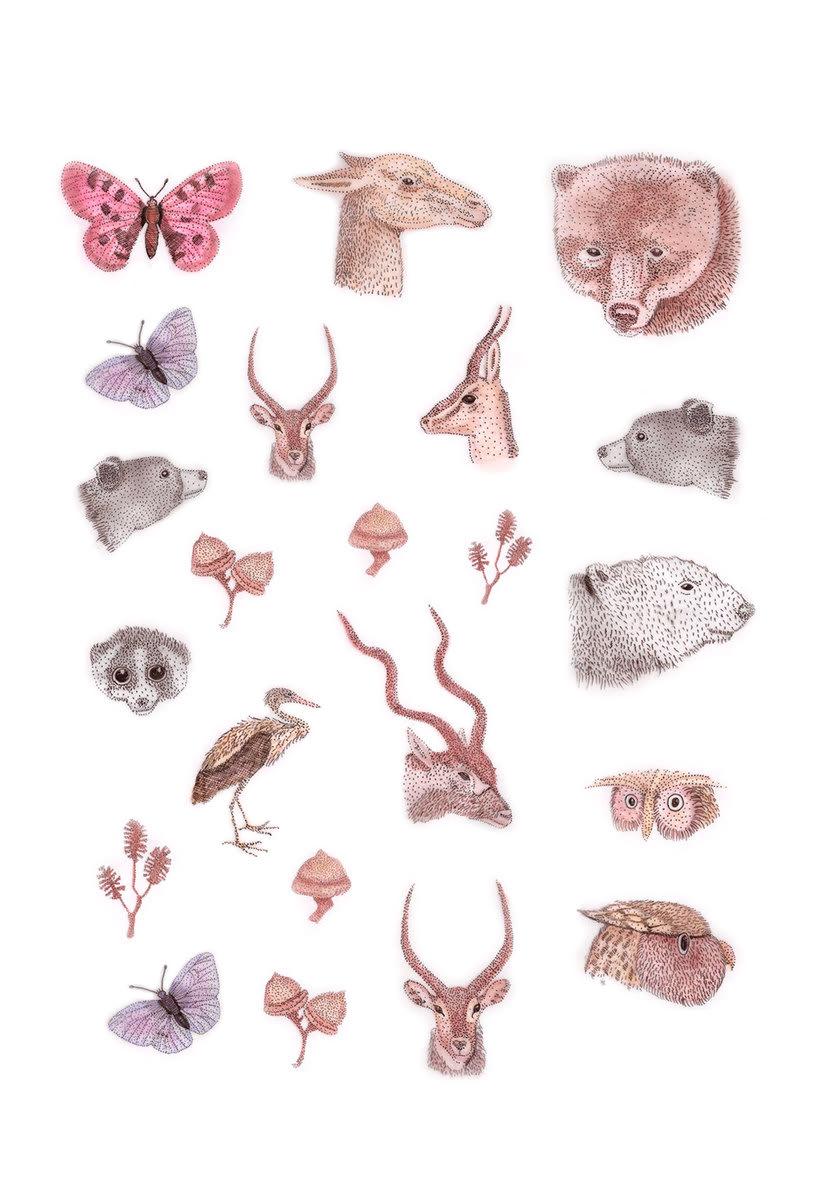 Naturaleza e ilustración una y otra vez 15