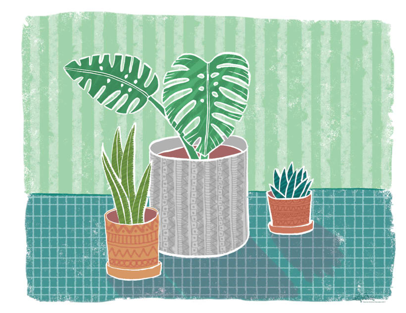 Plants -1