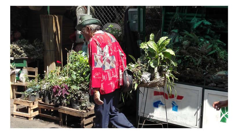 Identidad Paseo de los Yuyos - Mercado Nº 4  de Asunción. 7