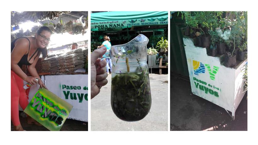 Identidad Paseo de los Yuyos - Mercado Nº 4  de Asunción. 9
