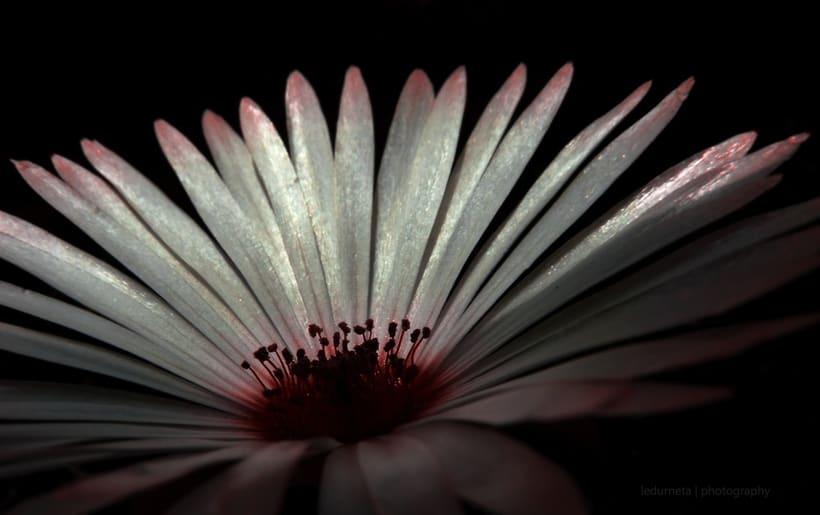 La belleza de las flores 0