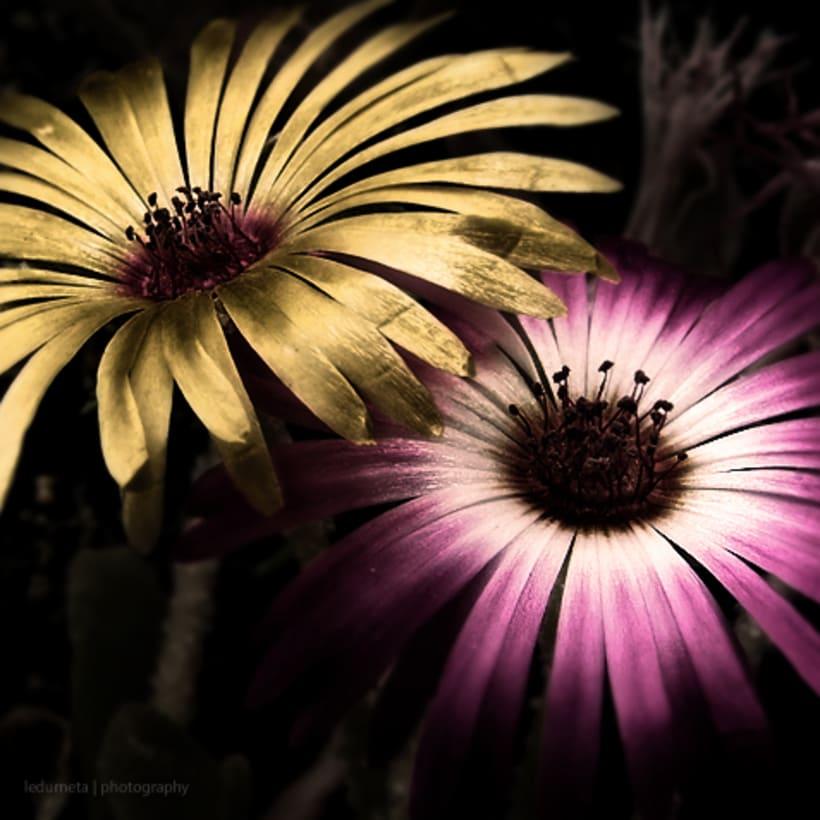 La belleza de las flores 1