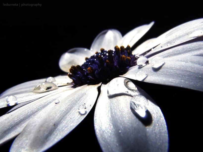 La belleza de las flores 2
