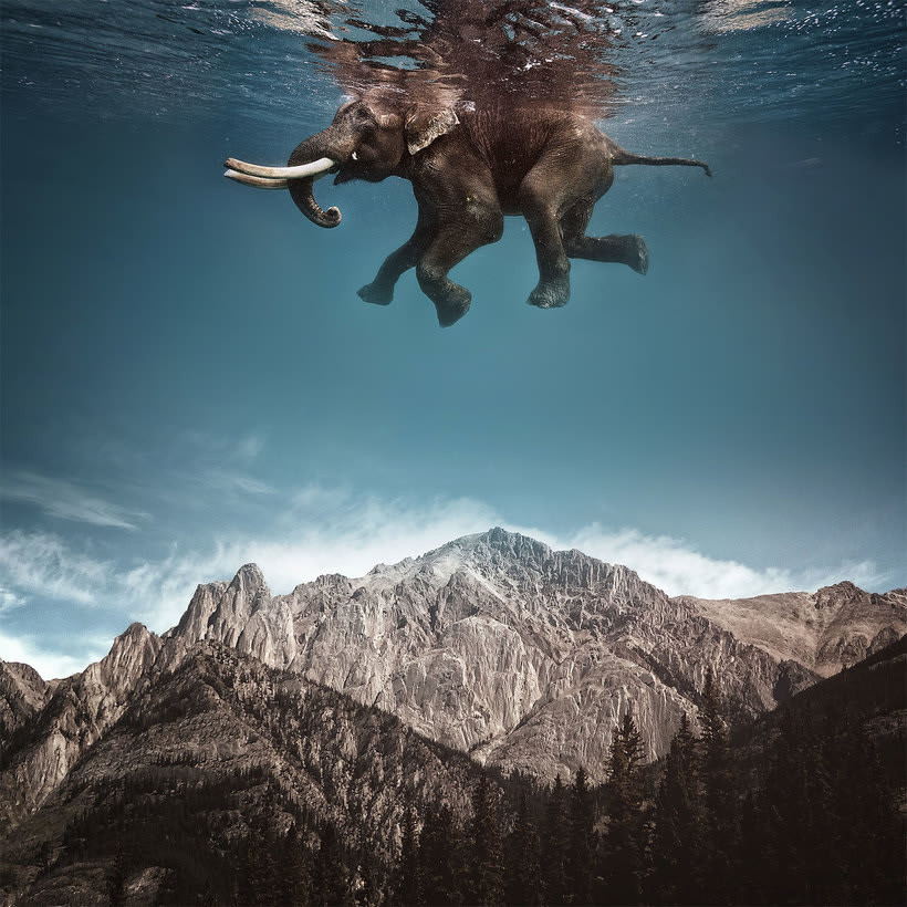 Karen Cantuq reinventa la naturaleza con sus collages fotorrealistas 5