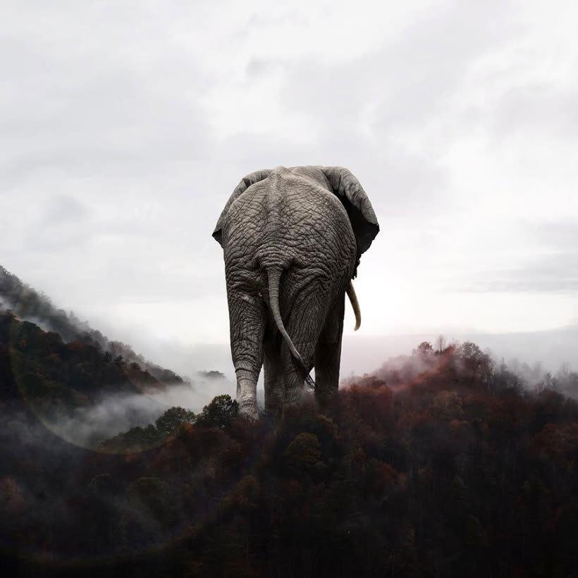 Karen Cantuq reinventa la naturaleza con sus collages fotorrealistas 8