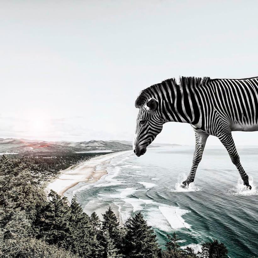 Karen Cantuq reinventa la naturaleza con sus collages fotorrealistas 9
